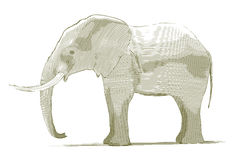 Engraved Elephant Stock Photography
