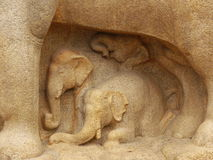 Engraved  elephants Stock Image
