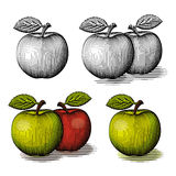 Engraved green and red apple. Stock Images