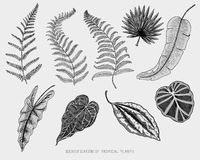 Engraved, hand drawn tropical or exotic leaves isolated, leaf of different vintage looking plants. monstera and fern. Palm with banana botany set Royalty Free Stock Image