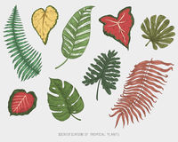 Engraved, hand drawn tropical or exotic leaves isolated, leaf of different vintage looking plants. monstera and fern. Palm with banana botany set Royalty Free Stock Images
