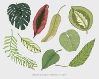 Engraved, hand drawn tropical or exotic leaves isolated, leaf of different vintage looking plants. monstera and fern. Palm with banana botany set Stock Photo