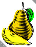 Engraved isolated engrave vector illustration of a pear Royalty Free Stock Photos