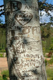 Engraved tree Stock Image