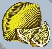 Engraved  vector illustration of a lemon Stock Photo