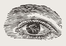 Engraved vintage eye Royalty Free Stock Photography