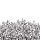 Engraved wheat background. Vector background with engraved field of wheat, hand drawn illustration in vintage style Royalty Free Stock Photo