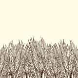 Engraved wheat background. Vector background with engraved field of wheat, hand drawn illustration in vintage style Stock Photo