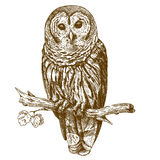 Engraving antique illustration of owl. Vector engraving antique illustration of owl on a brench isolated on white background Stock Photos