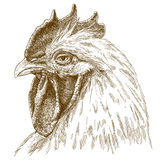 Engraving  antique illustration of rooster head Royalty Free Stock Photos