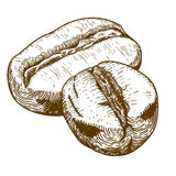 Engraving antique illustration of two coffee beans. Vector engraving antique illustration of two coffee beans  on white background Stock Photos
