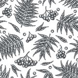 Engraving autumn rowanberry seamless pattern. Stock Images
