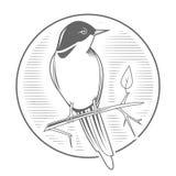 Engraving bird nightingale emblem vector Royalty Free Stock Images