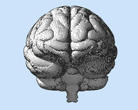Engraving brain illustration in front view on blue BG Stock Photo
