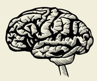 Engraving brain illustration Stock Images