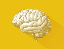 Engraving brain illustration on yellow BG Stock Image