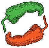 Engraving color vector illustration peppers Stock Photography