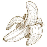 Engraving illustration of banana Royalty Free Stock Images