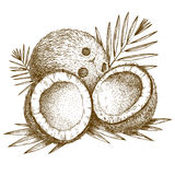 Engraving  illustration of coconut and palm leaf Stock Photos