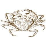 Engraving illustration of crab. Vector antique engraving illustration of crab isolated on white background Stock Photography