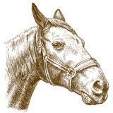 Engraving illustration of horse head Stock Photography
