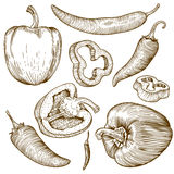 Engraving illustration of many peppers Stock Photography