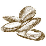Engraving illustration of mussel Royalty Free Stock Photo