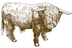Free Engraving Illustration Of Highland Cattle Royalty Free Stock Photos - 135917278