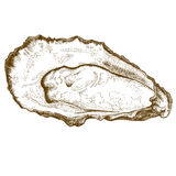 Engraving  illustration of oyster Stock Image