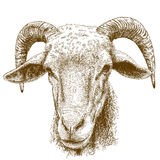 Engraving illustration of rams head Royalty Free Stock Images