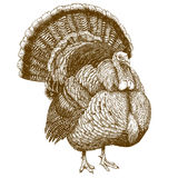 Engraving illustration of turkey Stock Photos