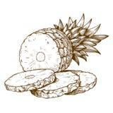 Engraving pineapple slices on white background Stock Photo