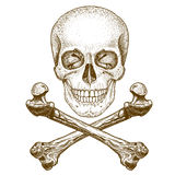 Engraving skull and crossbones on white background. Vector engraving illustration of skull and crossbones on white background stock illustration