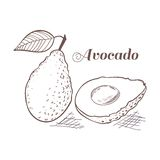 Engraving style avocado with leaf and slice Royalty Free Stock Images