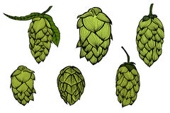 Engraving style Hops set Royalty Free Stock Photos