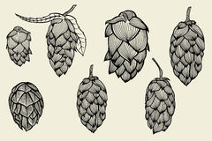 Engraving style Hops set Stock Photos