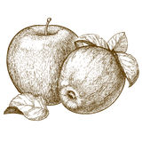 Engraving two red apples and leaves Stock Images