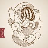 Engraving vintage hand drawn vector fruit berry ap Stock Photos