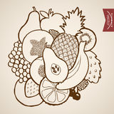 Engraving vintage hand drawn vector fruit kiwi che Stock Image