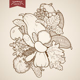Engraving vintage hand drawn vector fruit zucchini Royalty Free Stock Image