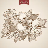 Engraving vintage hand drawn vector leaves Sketch Stock Photos