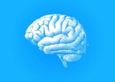 Engraving white brain on blue BG Royalty Free Stock Image
