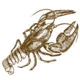 Engraving woodcut illustration of crayfish on white background Stock Image