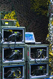 Engrenagem da inteligência militar   Imagem de Stock