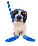 Engrenagem Snorkeling desgastando do filhote de cachorro no fundo branco Imagens de Stock