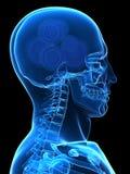 Engrenagens em uma cabeça Imagem de Stock