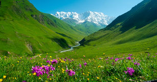 Enguri river valley near Ushguli, Georgia Royalty Free Stock Photos