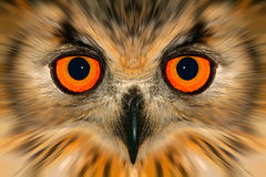Enhanced owl portrait Stock Image
