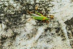 Enhet av myror Royaltyfri Bild