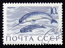 Enhydra lutris animal, circa 1971. MOSCOW, RUSSIA - FEBRUARY 12, 2017: a post stamp printed in the USSR shows Enhydra lutris animal, the series `Marine Mammals Royalty Free Stock Photo